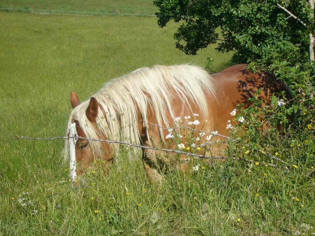 hästar sommar 2007 031